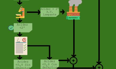 Categorias Aceite de Oliva Infografia