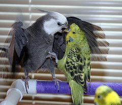 aceite oliva mascotas aves