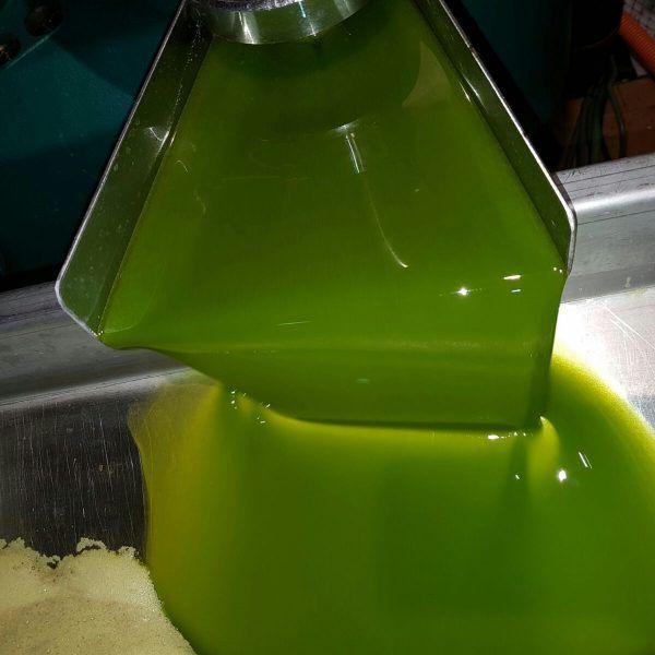 aceite-oliva-temprano-produccion