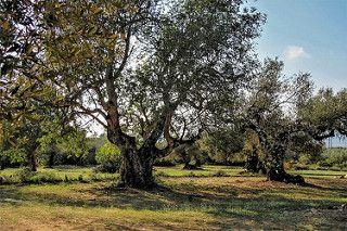 es caro el precio del aceite de oliva